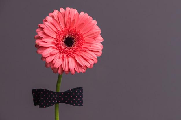 Розовый цветок герберы с бабочкой на стебле