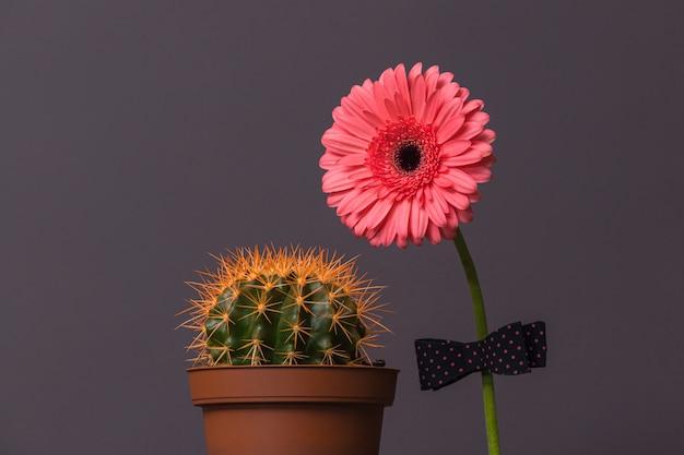 Розовый цветок герберы с бабочкой и кактусом