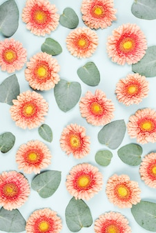 Pink gerbera flowers and leave pattern on blue background