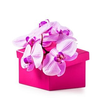 蘭の花とピンクのギフトボックス豪華な休日のプレゼント白い背景で隔離のオブジェクト