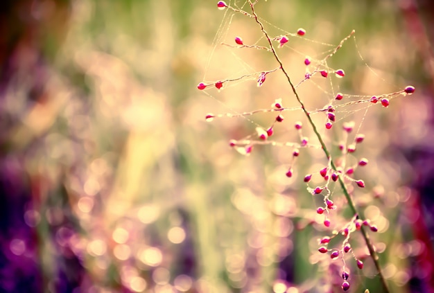 Pink grass flower with colorful bokeh  abstract spring,summer ,autumn background