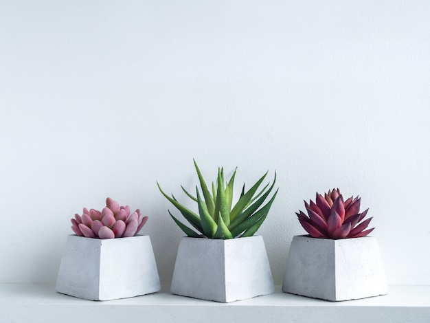 Pink, green and red succulent plants in modern geometric cement planters on white wood shelf on white