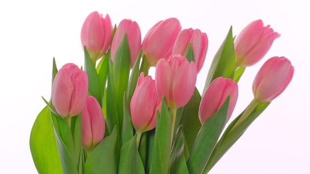 Розовая открытка на день матери, женский день, 8 марта с розовыми тюльпанами на белом фоне. концепция на день матери, день святого валентина, день рождения. плоская планировка, копирование пространства