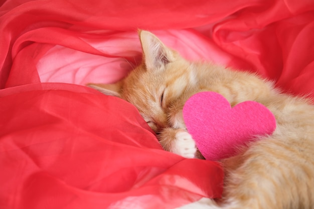 펠트로 만든 핑크 하트와 귀여운 생강 새끼 고양이는 붉은 바람이 잘 통하는 천에 놓여 있습니다