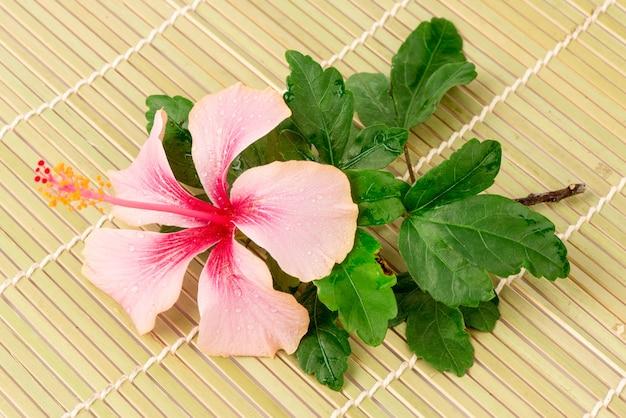 Розовый цветок гибискуса на фоне бамбука.
