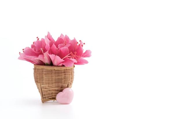 白で隔離されるピンクのハイビスカスの花。
