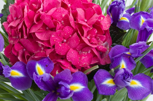 Pink hortensia and violet irise flowers background