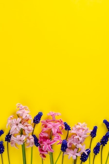 Pink hyacinth and blue muscari flowers on yellow