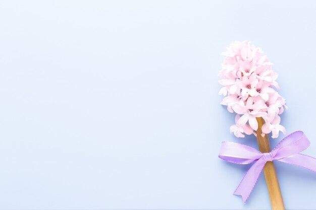 Розовый цветок гиацинта, весенние цветы. аромат цветущих гиацинтов - символ ранней весны. открытка, плоская планировка.