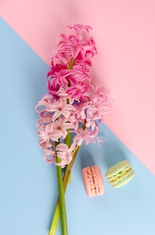 Pink hyacinth flowers on pastel pink and blue background with two macaroons. overhead shot. flat lay. vertical