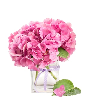 Pink hydrangea bunch  inside glass vase isolated on white