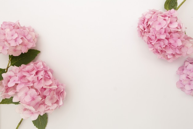 Pink hydrangea flower frame, copy space over white background