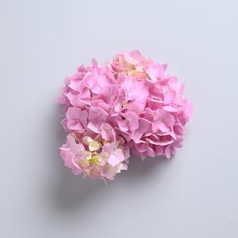 Розовый цветок гортензии на пастельно-сером. креативный минималистичный стиль.