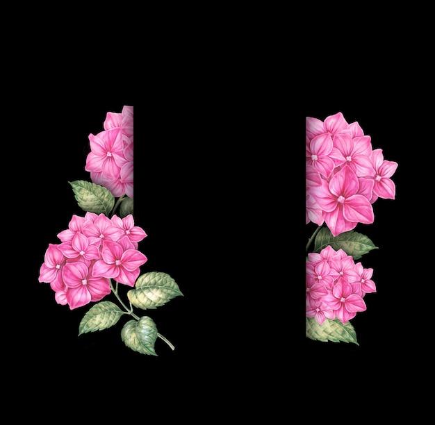 Pink hydrangea flowers on black background