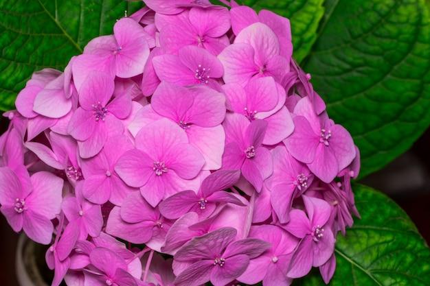 庭の上面図にピンクのアジサイの花。