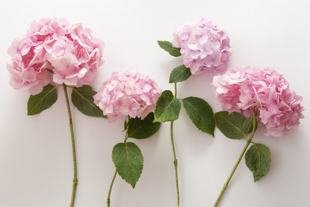 Pink hydrangea flowers in a raw, natural live flowers