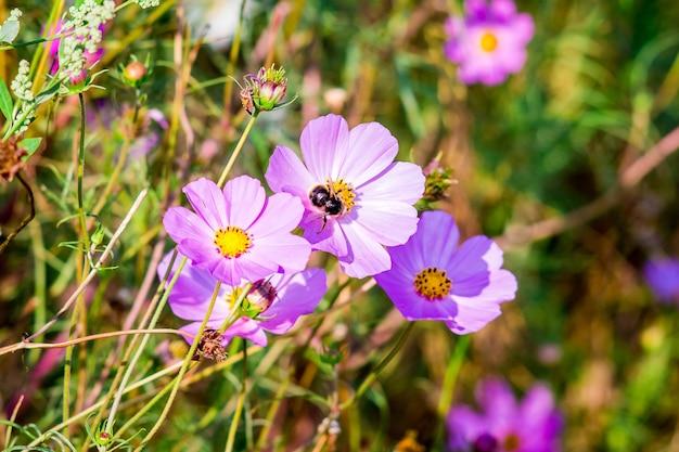 晴天時のピンクのコスメヤ。花の蜂