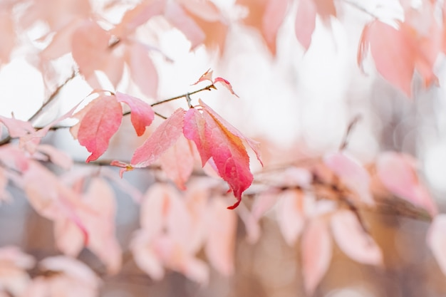 ぼやけた自然にピンクの葉