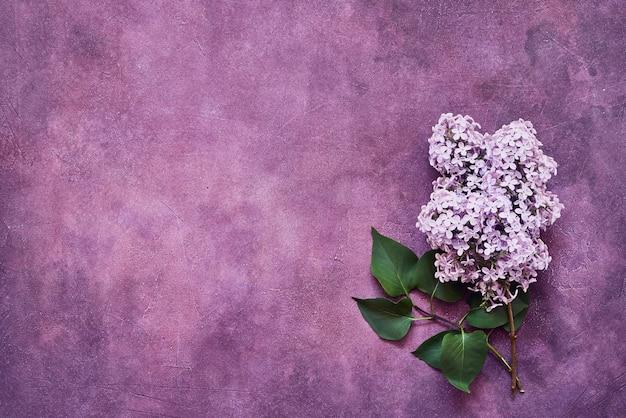 Розовые цветы сирени на фиолетовом фоне. копирование пространства, вид сверху. минимализм