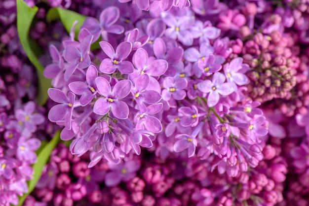 Розовые сиреневые цветы