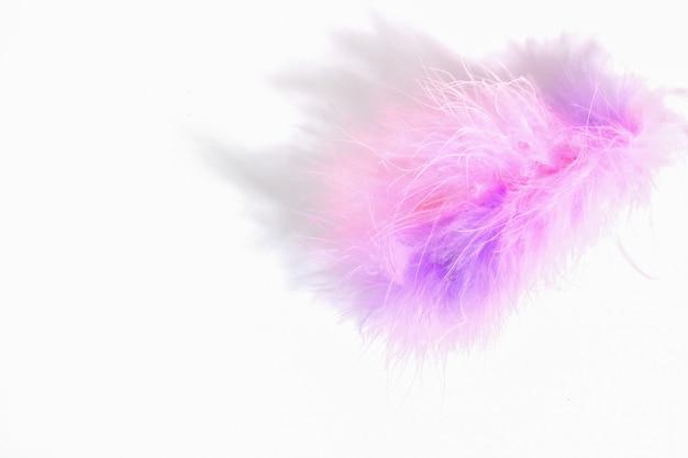 Розовое сиреневое перо пуха, изолированные на белом фоне крупным планом. пушистый розовый пух.