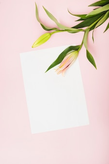Pink lily buds on white paper over the pink background