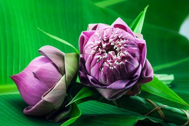 Pink lotus flower on banana leaf
