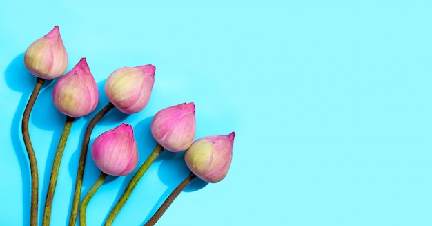 Pink lotus flower on blue background.