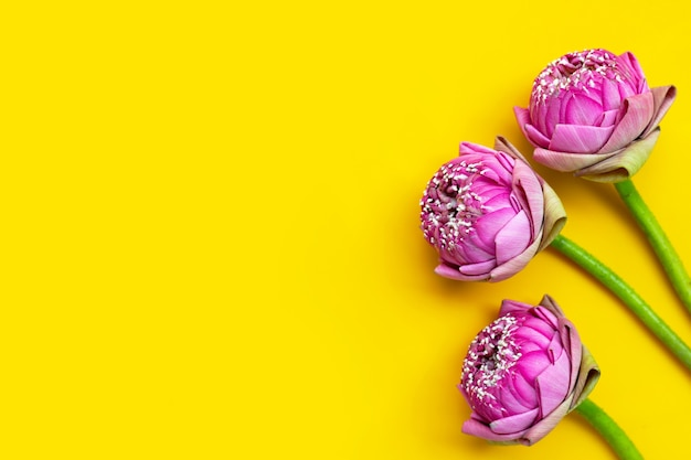 Розовый цветок лотоса на желтом фоне. вид сверху