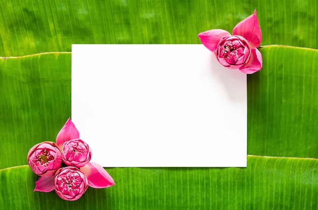 Pink lotus flowers set in corner of blank white space for text on banana leaves background for thailand full moon or loy krathong festival.