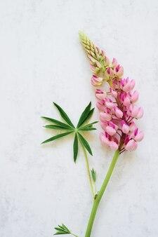 Розовый цветок люпина на белом мраморном столе. вид сверху, копировать пространство