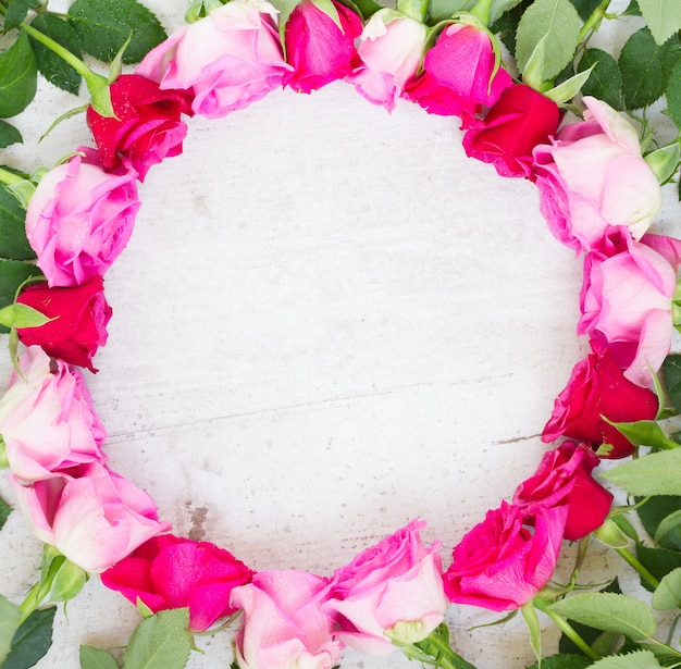 Pink and mageta fresh roses border on white Premium Photo