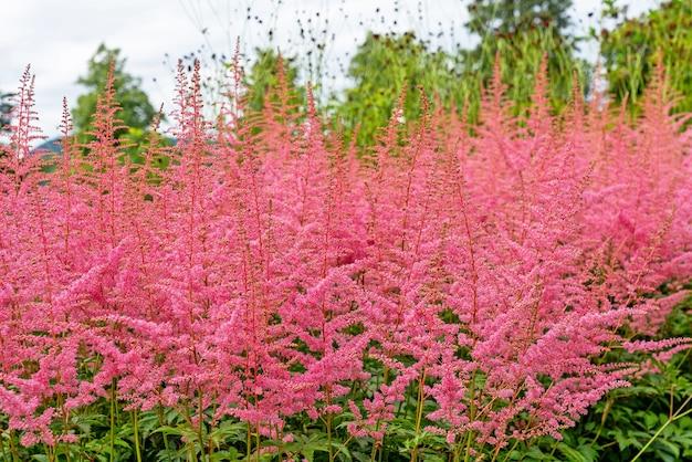 Розовый луг цветы природный ландшафт