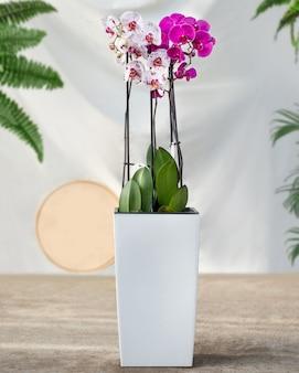 白い鍋にピンクの蛾の蘭