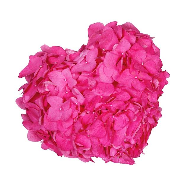 웹 디자인 엽서 배너 발렌타인 데이 결혼식 생일 국제 여성의 날에 대 한 격리 된 흰색 배경에 수국 꽃에서 만든 분홍색 또는 붉은 마음