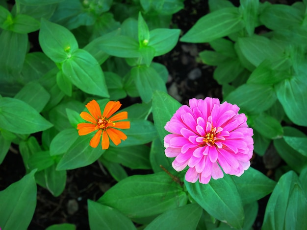 Pink and orange flowers in the garden