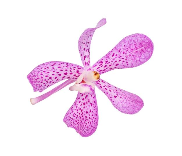 분홍색 난초 꽃 흰색 배경에 고립