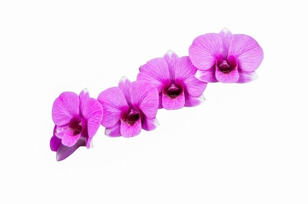 복사 및 격리와 지상에 분홍색 난초 꽃