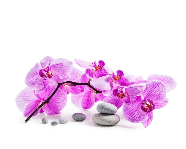 ピンクの蘭の花と白い背景のクリッピングパスに分離されたスパ石が含まれています