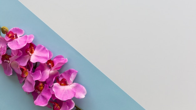 Pink orchid flowers arranged on corner of dual background
