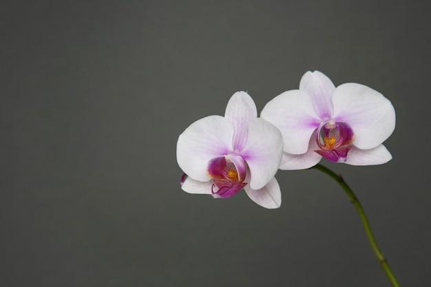 회색 바탕에 분홍색 난초 꽃