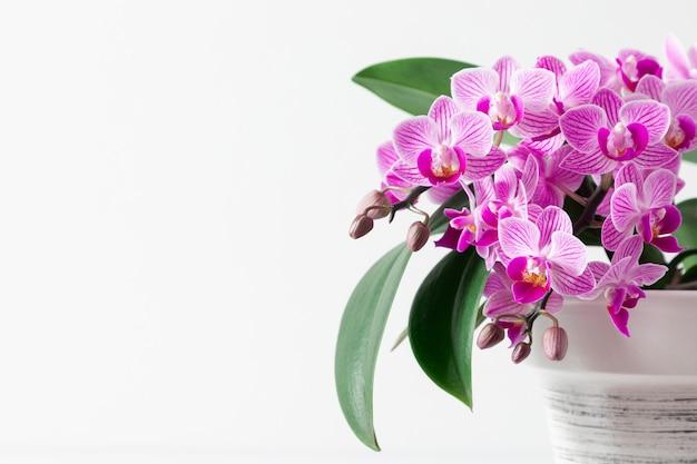 흰색 테이블에 냄비에 분홍색 난초