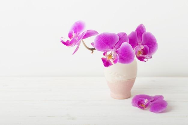 흰색 꽃병에 분홍색 난초