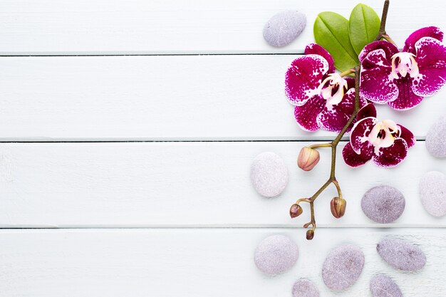 Розовая орхидея на деревянном фоне. спа и оздоровительная сцена.