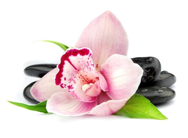 흰색에 검은 돌에 분홍색 난초