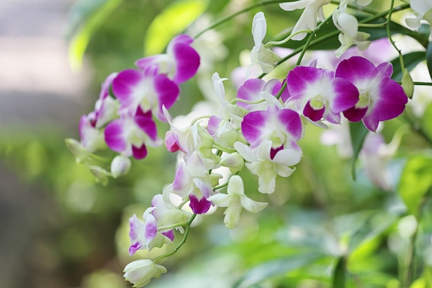 Pink orchids are blooming in the flower garden.