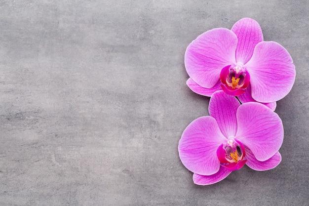 Розовые орхидеи на сером фоне