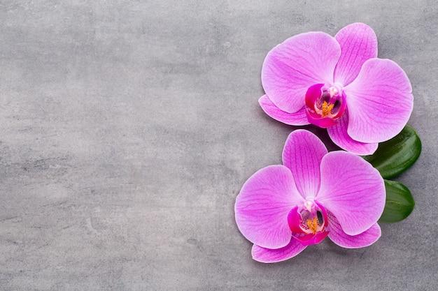 회색 테이블에 분홍색 난초