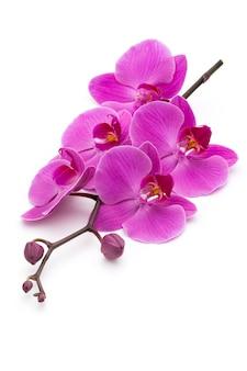 Розовые орхидеи на белой поверхности.
