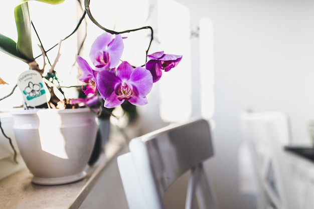 Pink orchids in a vase on a windowsill with white chairs